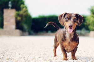Give your little pooch the best with fresh food